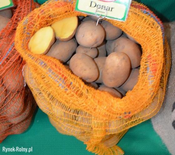 Ziemniaki jadalne odmiany Denar