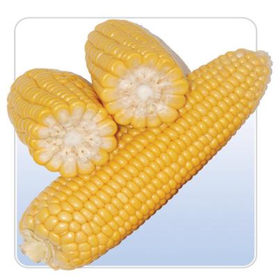 Otreby kukurydziane