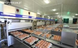 Bez pośredników - FERMA - sprzedaż jaj - S, M, L - także export