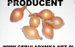 cebula dymka, owsik - producent
