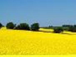 kupie rzepak, soję, łubin, groch żółty