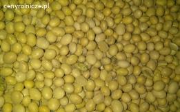 Dostawa soi bez GMO