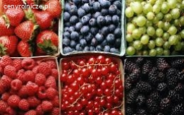 Jagody, owoce lesne slodkie, dojrzale roznych odmian. Produkujemy naturalny sok, ocet, polprodukty