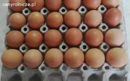 Jajka od kur wolnowybiegowych