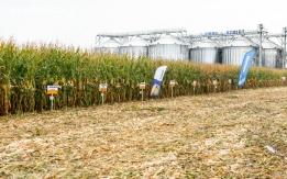Kukurydza mokra skup
