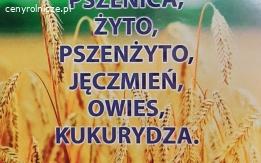 Kupię zboże rzepak, pszenice, żyto kukurydze, , jęczmień, owies, pszenżyto.