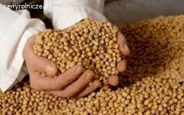 Kupimy każą ilość ziarna soi