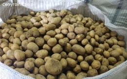 Kupujemy ziemniaki na eksport od 22 ton