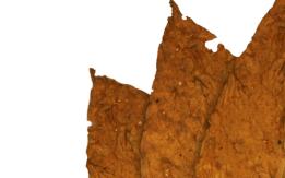 Liscie tytoniu virginia burley dark kentucky oriental od firmy najlepsza jakosc