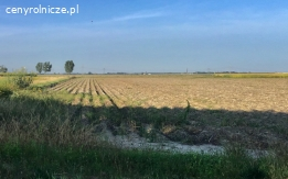 Mazowieckie 4 ha