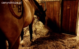 Ściółka dla koni torfowa-ekologiczna i zdrowotna . Dostawy CAŁA POLSKA