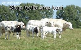 Skup bydła oraz koni