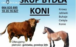 SKUP KONI I bydła