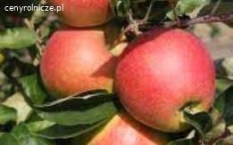 Soczyste ekologiczne Jabłka