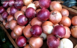 Sprzedam cebulę, czosnek, imbir i inne gatunki oraz warzywa
