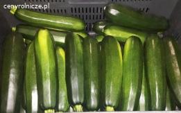 Sprzedam - Cukinia zielona RHODOS ok. 10 ton