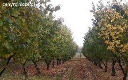 Sprzedam grunt rolny o pow. 2 ha w Piotrowicach