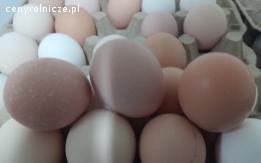 Sprzedam jaja z wolnego wybiegu, hurt/detal, do 20.000szt/doba. Woj. podlaskie