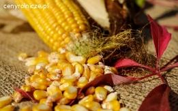 Sprzedam pszenicę, kukurydzę, soję (zbioru 2019)