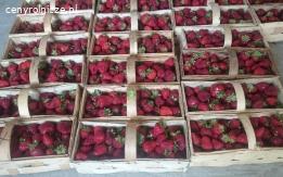 Sprzedam truskawke 6zł/kg