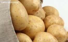 świeże ziemniaki z Holandii  na sprzedaż