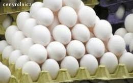 Ukraina. Jaja kurze dietyczne od 1,7zl opakowanie 10szt. Swieze najwyzszej klasy od kur karmionych