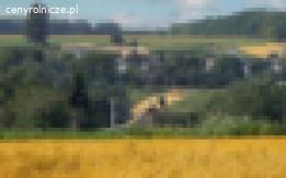 Ukraina. Sprzedam miod 6 zl/kg z gospodarstwa pszczelarskiego. Slonecznikowy, akacjowy, rzepakowy