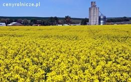 Ukraina. Ziarna rzepaku 1300 zl/tona, wysokobialkowa sruta, makuch, olej sertyfikowane na biopaliwa