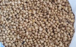 Ziarno soi GMO - cena z dostawą