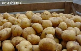 ziemniaki jadalne odsort myte Cena 0,12 zł/kg