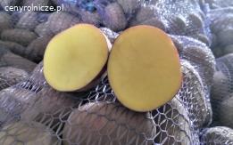 Ziemniaki wielkości sadzeniaka Baltic Rose